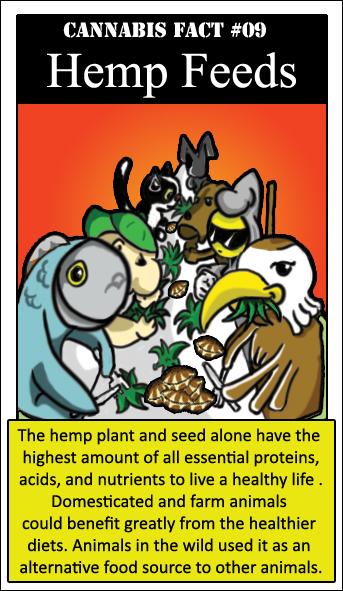 057-Hemp Feeds